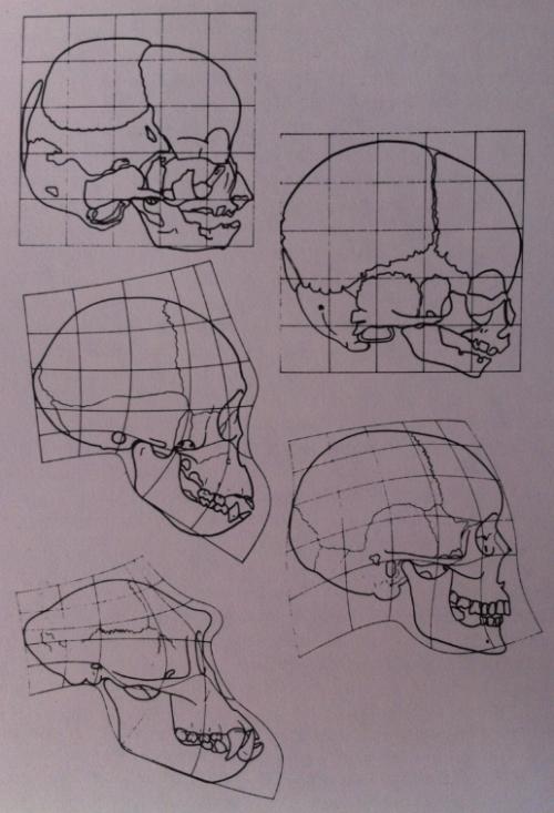 Figure 3 - Starck