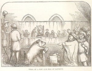 pig in court